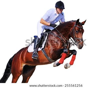Rider on bay horse in jumping show, isolated on white background - stock photo