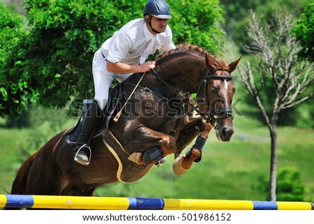 Rider on chestnut  horse in competitions