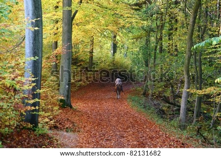 Rider on horse in a forest in autumn in Denmark - stock photo