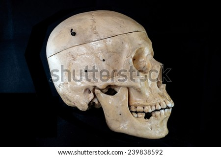 Right of human skull - stock photo