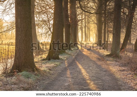 Rimed tree lane  on a frosty morning in February - stock photo