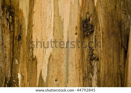 rind of a tree in a wood background image - stock photo