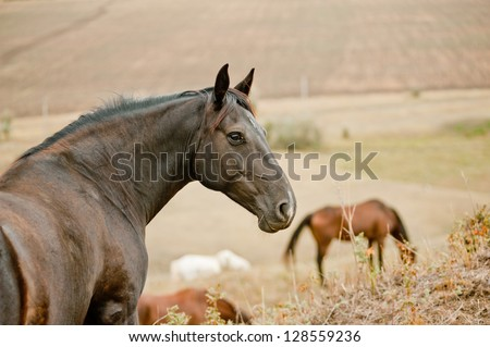 ringleader of a herd - stock photo