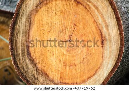 rings closeup of chopped tree trunk - stock photo