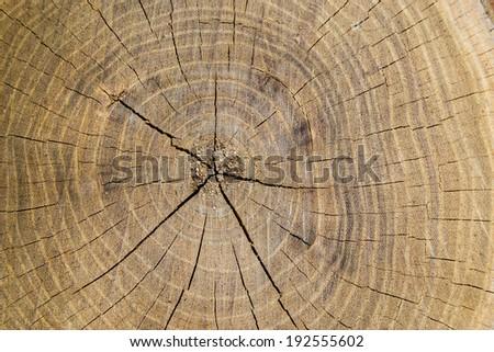 Rings tree background - stock photo