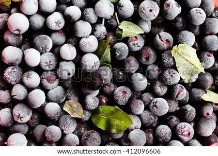 Ripe and juicy freshly picked blueberries - stock photo