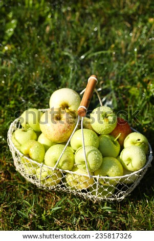 Ripe apples in basket on grass - stock photo