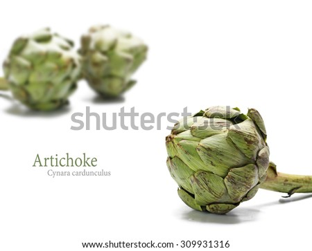 ripe artichoke and two others blurred in the background, isolated on white, sample text - stock photo