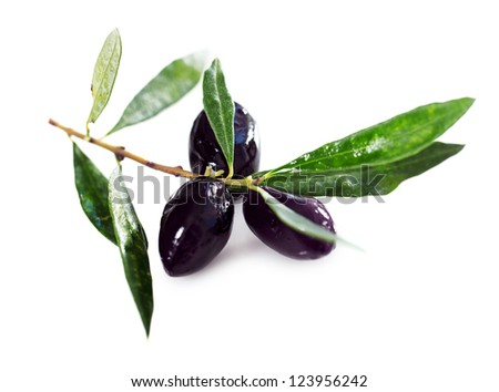 Ripe black olives with leaves on a white background