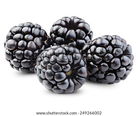 Ripe blackberry fruits. Isolated on white background.  Clipping Path  - stock photo