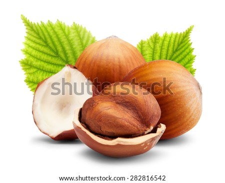 Ripe brown hazelnuts with green leaves on white background - stock photo