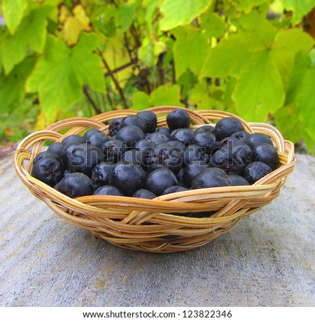 Ripe chokeberry in basket on green background, close-up - stock photo