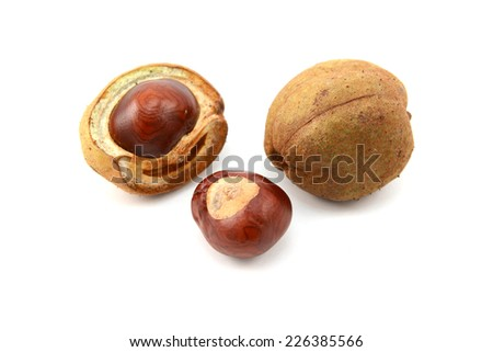 Ripe conkers in open and unopened smooth seed capsules from a red horse chestnut tree, isolated on a white background - stock photo