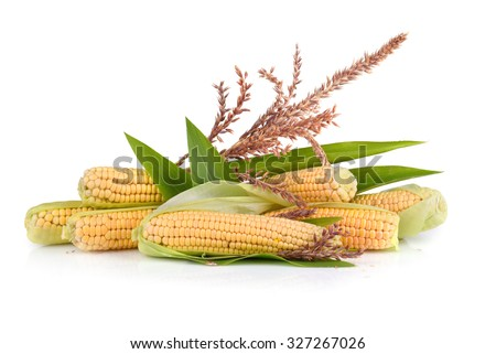 Ripe corn cobs with flowers on white background - stock photo