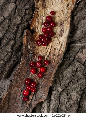 Ripe cranberries on a piece of bark - stock photo