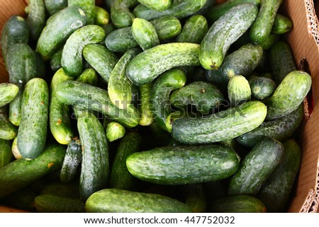 ripe cucumbers in the box in market