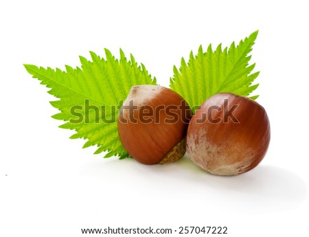 Ripe filbert and green leaves isolated on white - stock photo