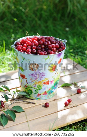 Ripe fresh cherries in a colored bucket and ripe cherries with leaves outdoor - stock photo