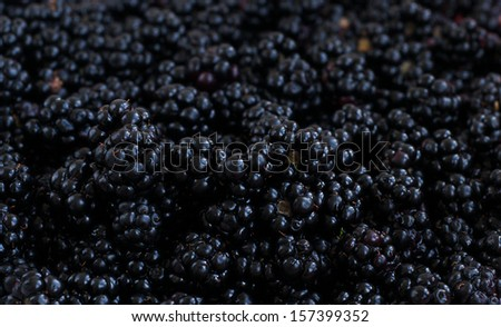 Ripe fresh organic blackberry background