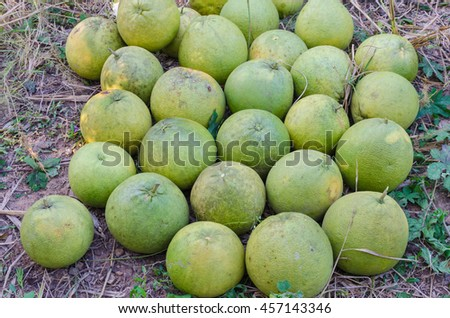 Ripe fresh pommel on nature background. Pamelo is one of the citrus fruits that is highly nutritious.   - stock photo
