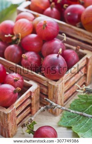 Ripe gooseberries in a decorative pot - stock photo