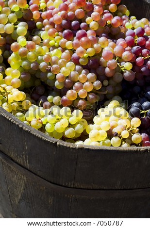 Ripe grape in bucket detail - stock photo