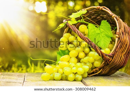 Ripe grapes in wicker basket on sunny background - stock photo