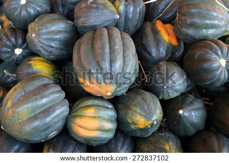 ripe harvested acorn squash at the market place - stock photo