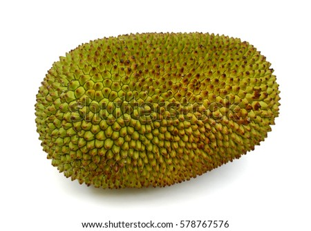 jackfruit stock images, royaltyfree images  vectors  shutterstock, Beautiful flower
