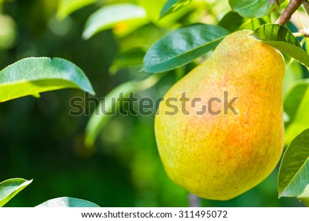 ripe juicy appetizing pear on blurred green background - stock photo