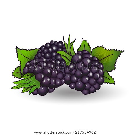 ripe juicy blackberries with green leaves -  illustration - stock photo