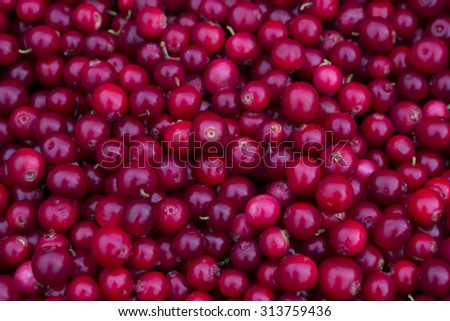 Ripe juicy cranberries, bright autumn colorful background.  - stock photo