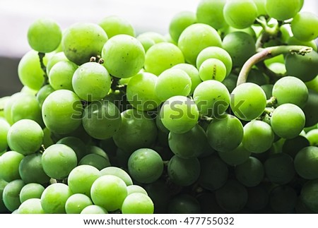 Ripe, juicy grapes displaying their beauty in the sunlight