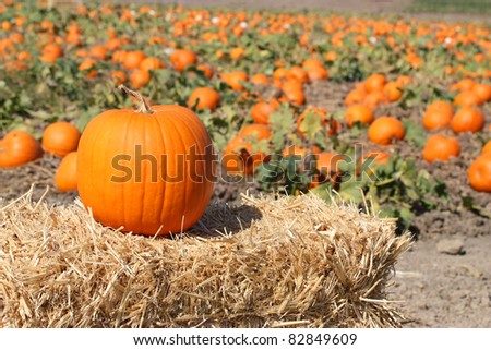 Ripe orange pumpkins on farm ground - stock photo