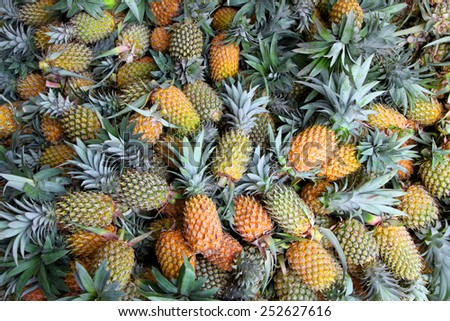 Ripe pineapples in the market - stock photo