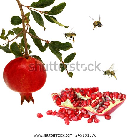 Ripe pomegranate fruits and honey bees. Isolated on white background  - stock photo