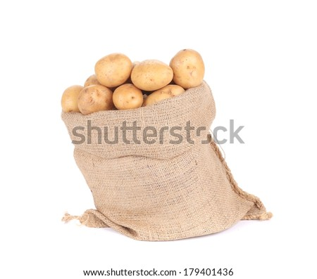 Ripe potatoes in burlap sack. Isolated on a white background.