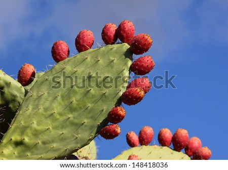 Ripe Prickly pair cactus and fruit against a blue sky. - stock photo
