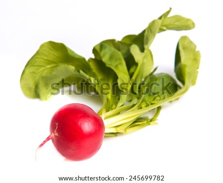 ripe radishes - stock photo