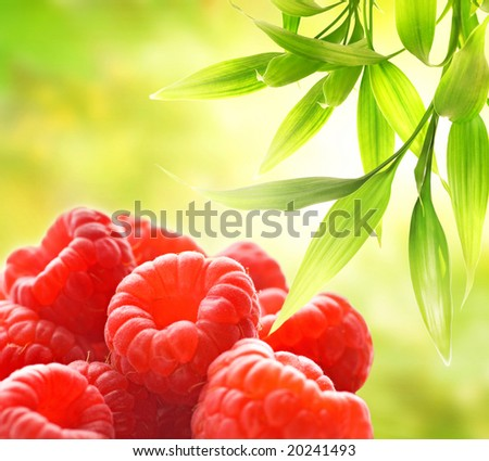 Ripe raspberries over abstract green background - stock photo