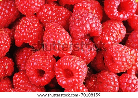 Ripe red raspberries close up