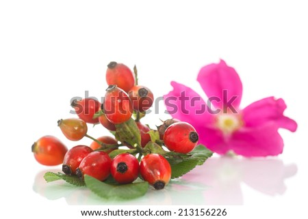 ripe rose hips with a flower on a white background - stock photo