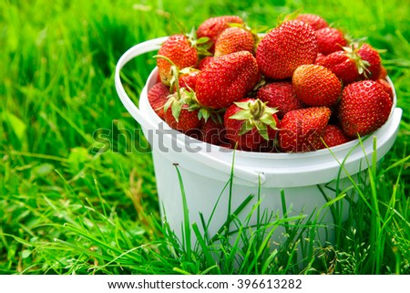 Ripe strawberry in basket on green grass - stock photo