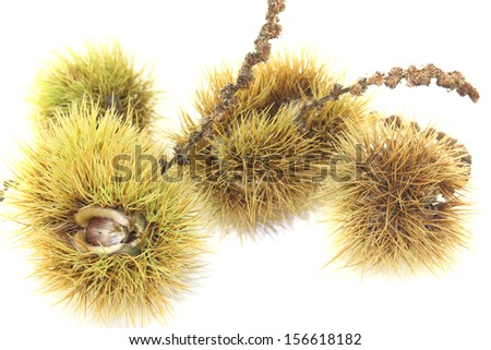 ripe sweet chestnuts with shells on a light background - stock photo