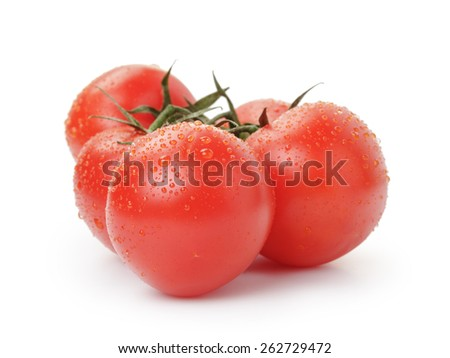ripe wet red tomatoes with branch isolated