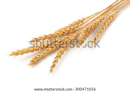 Ripe  wheat ears isolated on white - stock photo