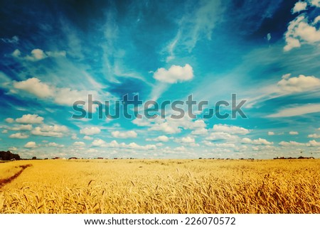ripe wheat field and blue sky instagram colors - stock photo