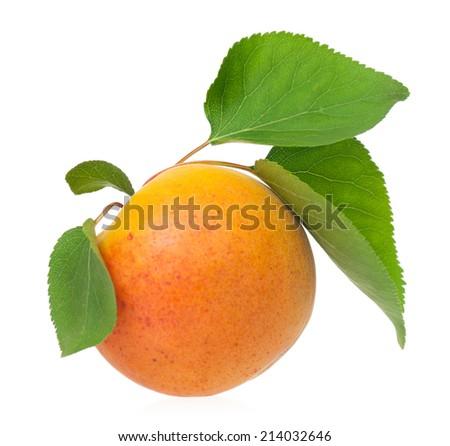 Ripe yellow apricot fruit isolated on white background cutout - stock photo