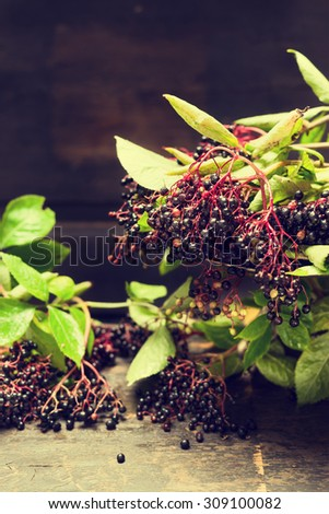 Ripening elderberries bunch on rustic table over dark wooden background - stock photo