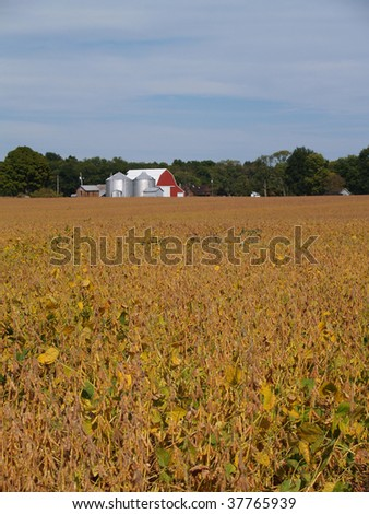 Ripening soybean field in front of red barn beneath a cloudy blue sky. - stock photo